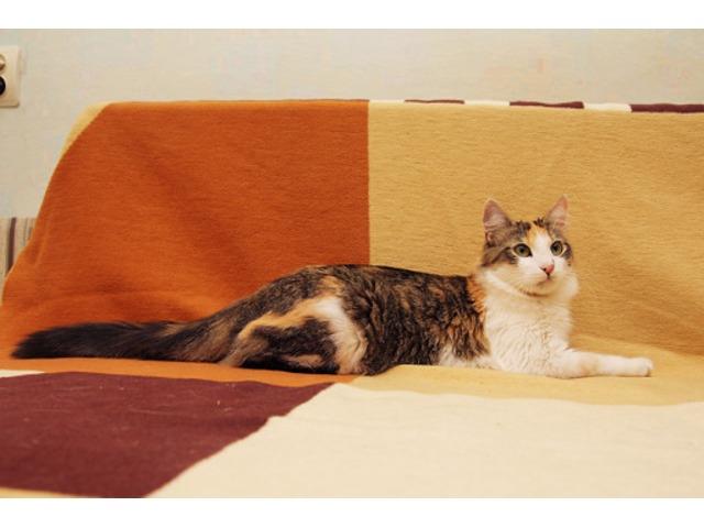 Выдержки из Правил содержания домашних собак, кошек